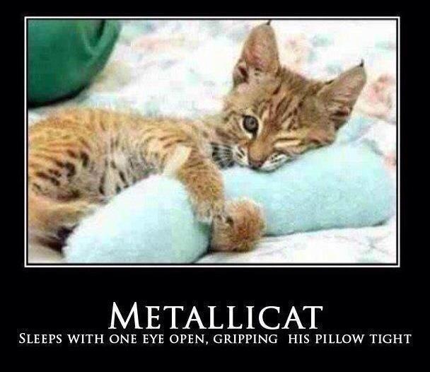 sleep-with-one-eye-open